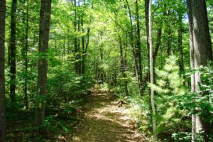 160' of Shoreline & 3 Acres of Woods on this Northern Wisconsin Lake!