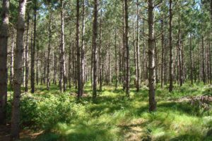 Northwest WI 5 Acres Wooded Land and Yellow Lake!