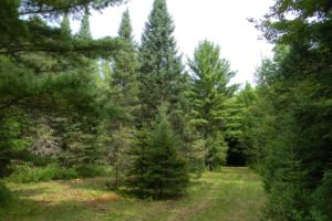 Oneida County Wooded Wisconsin Hunting Land!