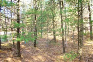Central Wisconsin Juneau County 8 Acres for Sale!