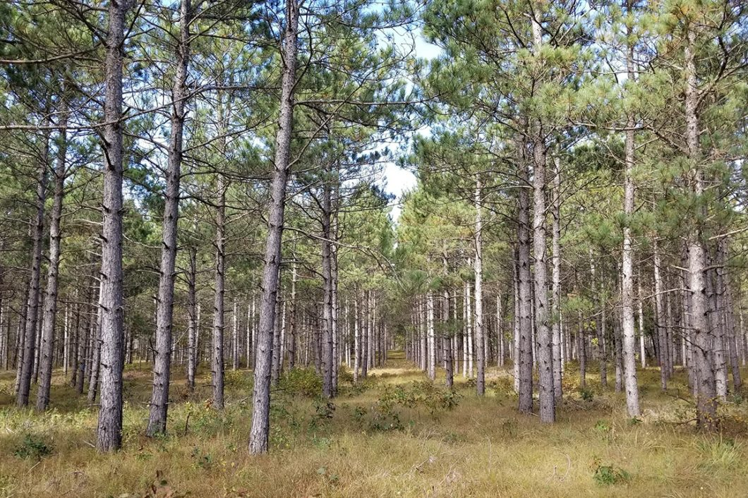 Central WI, 3.5 Acres Wooded Land & Petenwell Lake!