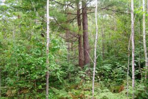 Oneida County Wooded Wisconsin Hunting Land $19,900!