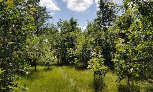 Central WI, 8 Acres, Woods, Trails, Wildlife & Lake Petenwell!
