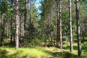 Central Wisconsin 5 Acre Camping Property near Castle Rock Lake!