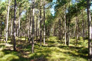 Adams County WI Wooded Property $17,900!