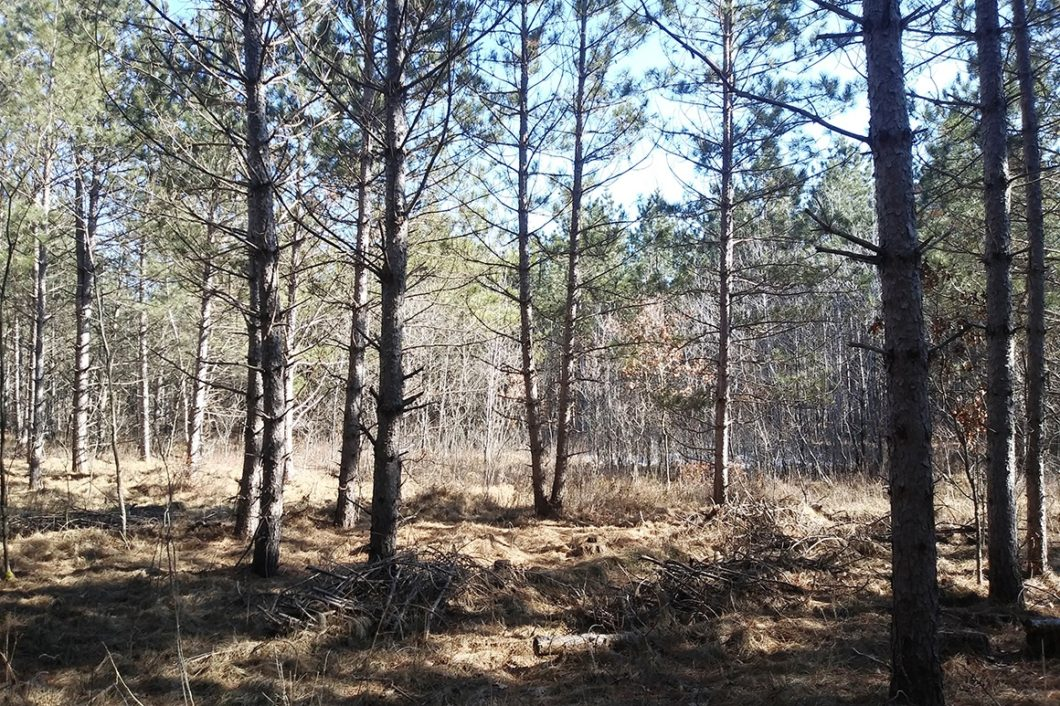 Central Wisconsin Juneau County 9.4 Acres for Sale!