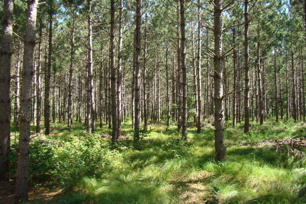 Central Wisconsin Juneau County 10 Acres for Sale!