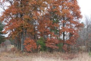 Wooded WI Burnett County Property Just North of Big Sand Lake!
