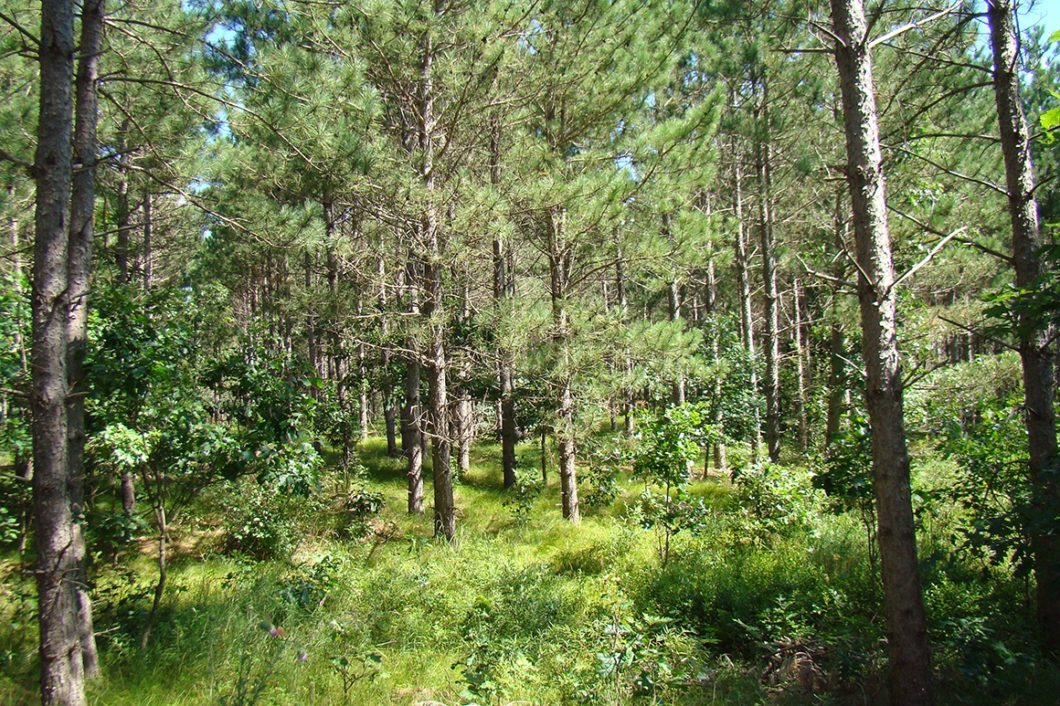 Central WI, Mature Woods, Camp or Build and Play on Castle Rock and Petenwell Lakes!