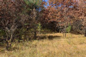 Burnett County WI Deer Camp Wooded Acreage!