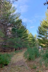 NW Wisconsin Campsite with 4.6 Acres, Mature Woods & Big Sand Lake!