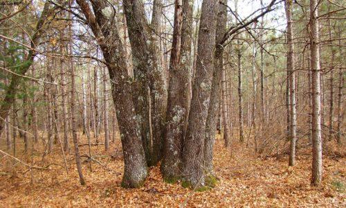 Northwest WI Burnett County Woods!