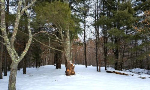 12.5 Acres with Pond in NW WI!