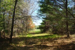 Webster, WI 6.7 Acre Retreat! Save $4k!