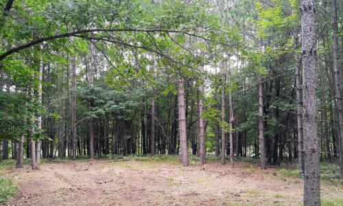 Northern Wisconsin 4 Acres, Woods, near Bass Lake!