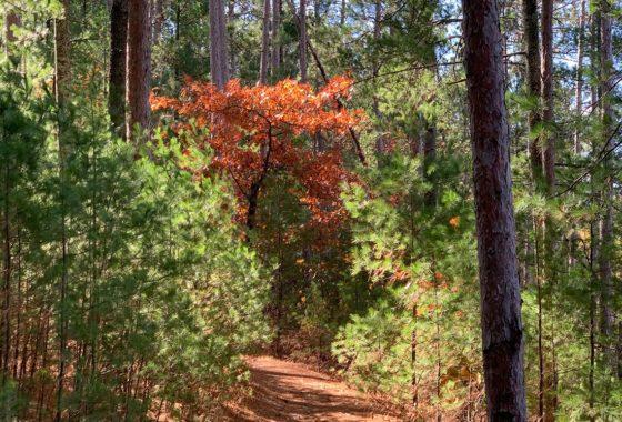 Northwest WI 10 Acres Wooded Land & Yellow Lake!