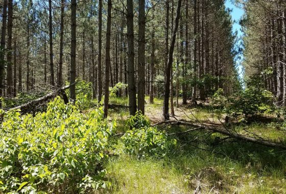 Central WI, 5 Acres Wooded Land & Petenwell Lake!