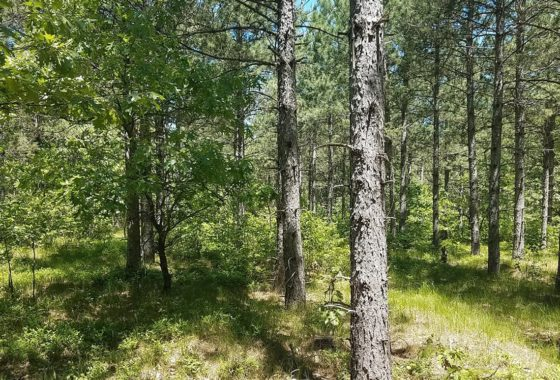 Central WI, 9.5 Acres Wooded Land & Petenwell Lake!