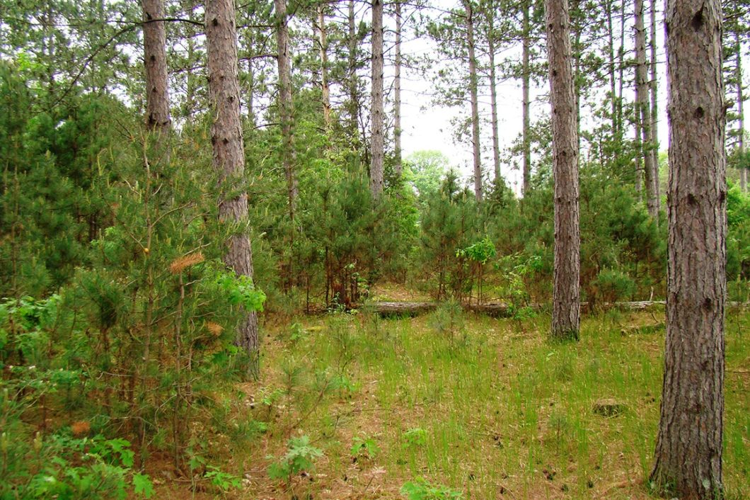 WI, 9 Acres, Woods, Trails, Wildlife & All Sports Lake!