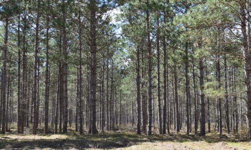 7 Acre Wooded Property in Rome, Wisconsin!