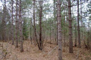 Oneida County Wooded Wisconsin Hunting Land near Lake Nokomis!