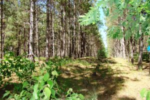NW WI Polk County Forest Surround 7 Acre Camp or Cabin Site!