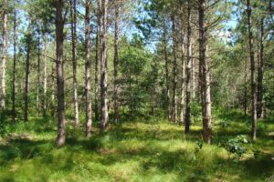 NW WI Polk County Forest Surround 4 Acre Camp or Cabin Site!