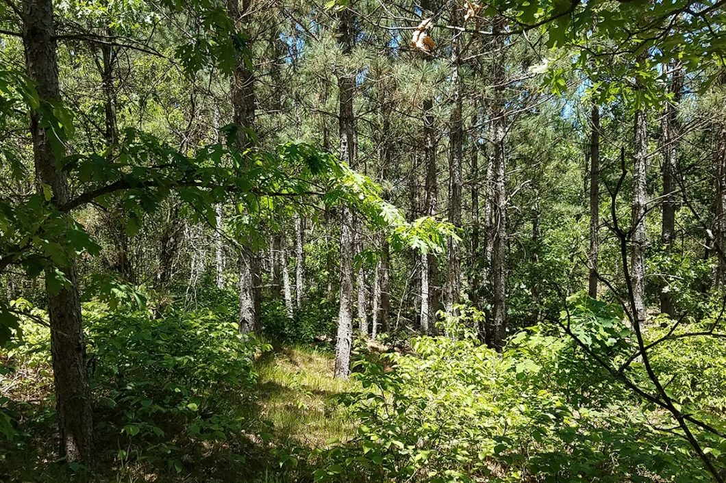Central Wisconsin Adams County 8 Acre Wooded Camp or Cabin Property!