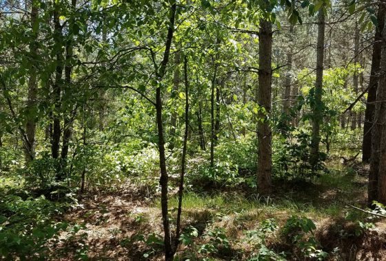 WI, 7 Acres, Woods, Trails, Wildlife & All Sports Lake!