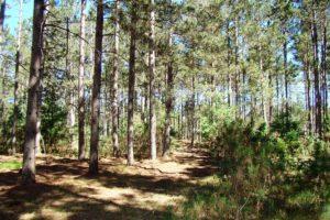 Northwest WI 3.7 Acres, Woods, Polk County!