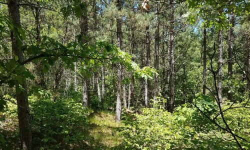 Central Wisconsin Adams County Wooded Camp or Cabin Property!