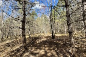 10 Wooded Acres in Northwest Wisconsin for Sale!