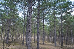 Wooded WI 5 Acre Camp or Cabin Site!