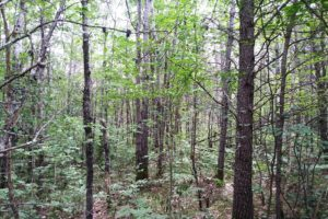 Northern Wisconsin 7.4 Acres, Woods, Near Yellow Lake!