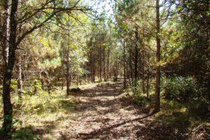 Northwest WI Burnett County Woods, Camp or Build!