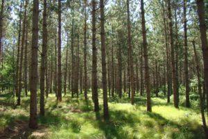 Burnett County WI Deer Camp, 10 Wooded Acres!