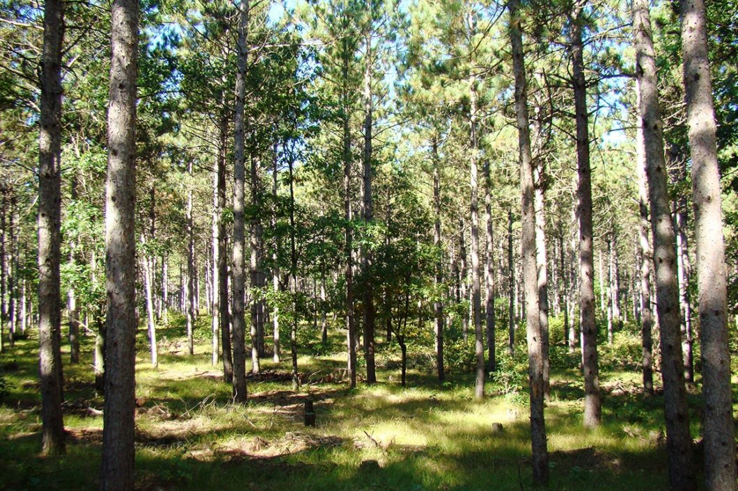 5 Acre Central Wisconsin Property Near Lake Petenwell!