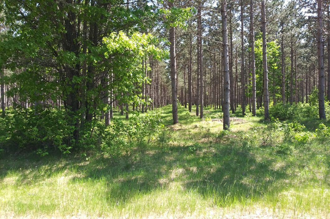 Central WI, 11 Acres, Woods, Trails, Wildlife & Lake Petenwell!